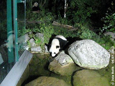 Fu Hu bei Teich und Mama Yang Yang (li hinten), ~ 23:15 Uhr, 6. Juli 2012
