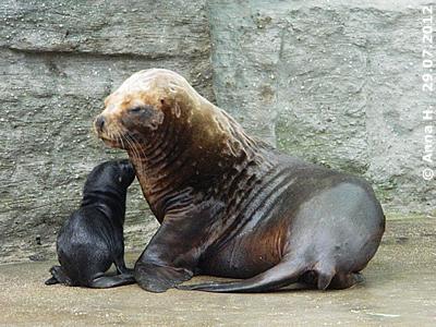 Mama Enya und ihr einen Tag altes Baby, 29. Juli 2012