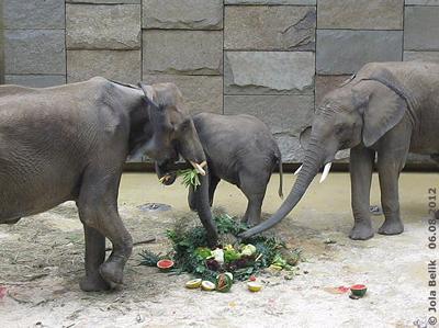 ... diese Torte schmeckt allen drei Elefanten!