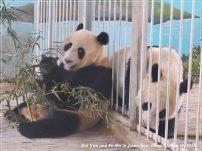 Cai Yun und Fu Hu