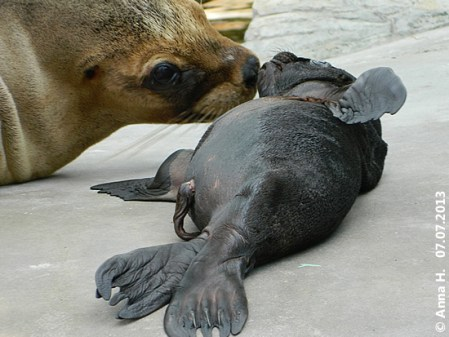 Kelo und Mini-Robbe