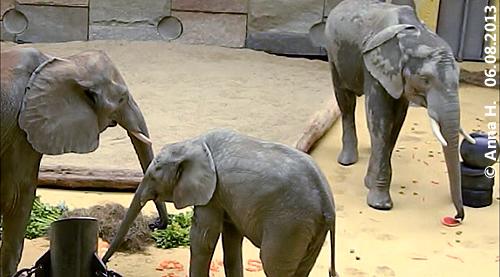 Tuluba mit Numbi und Kibo