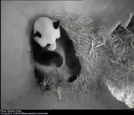 Yang Yang und Baby