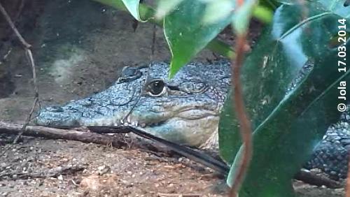 Kroko-Mädl