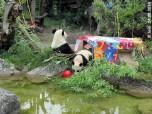 Fu Bao und Yang Yang