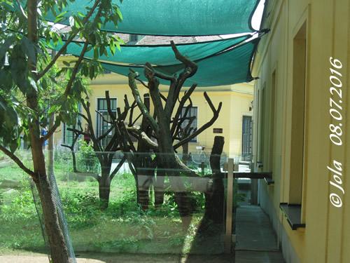 Außenanlage Koalas