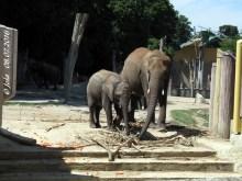 Iqhwa und Halbschwester Mongu, 22. Jni 2016
