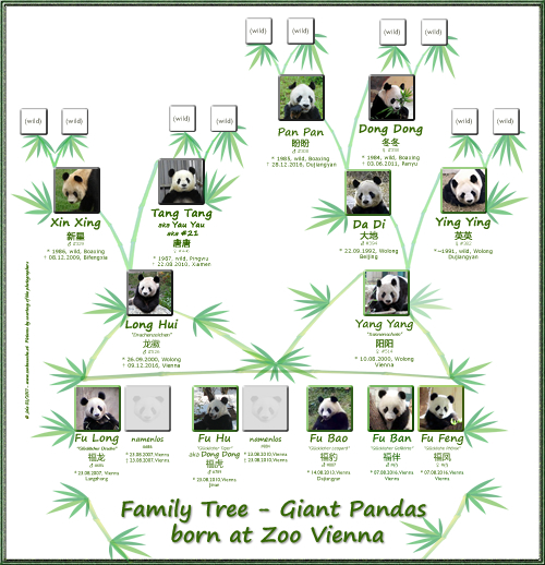 Stammbaum Pandas Wien