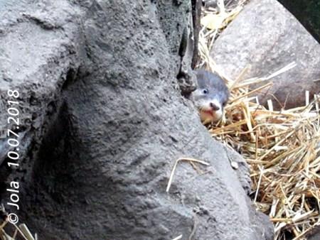 Otterbaby #2