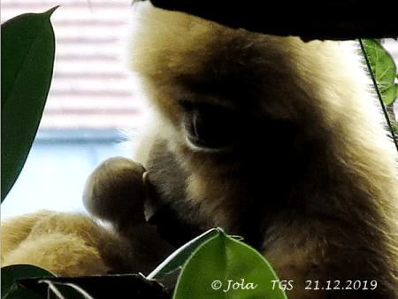 Sipura und Baby
