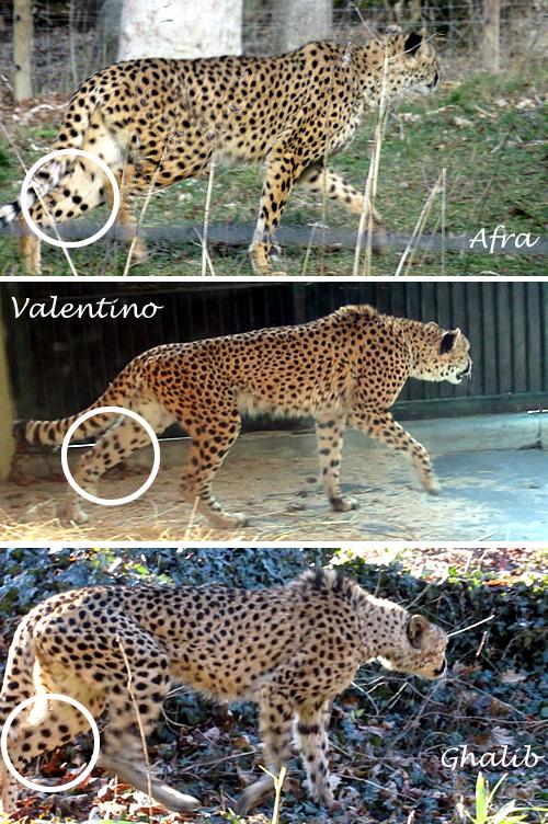 Afra, Valentino und Ghalib