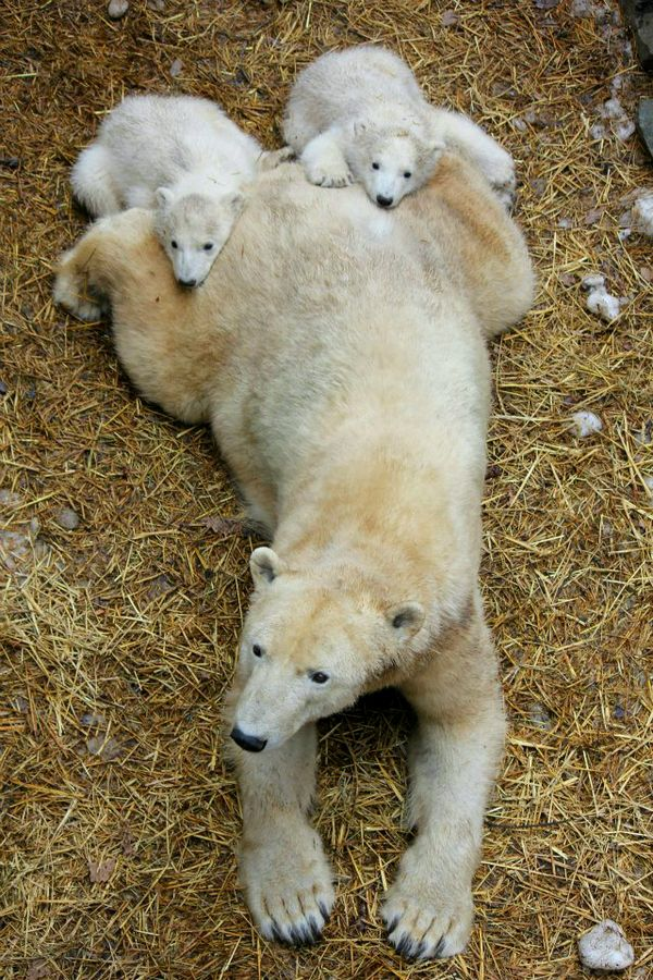 Cute Baby Polar Bear Wallpaper Update Zoo Brno Polar Bears Get Their First Check Up