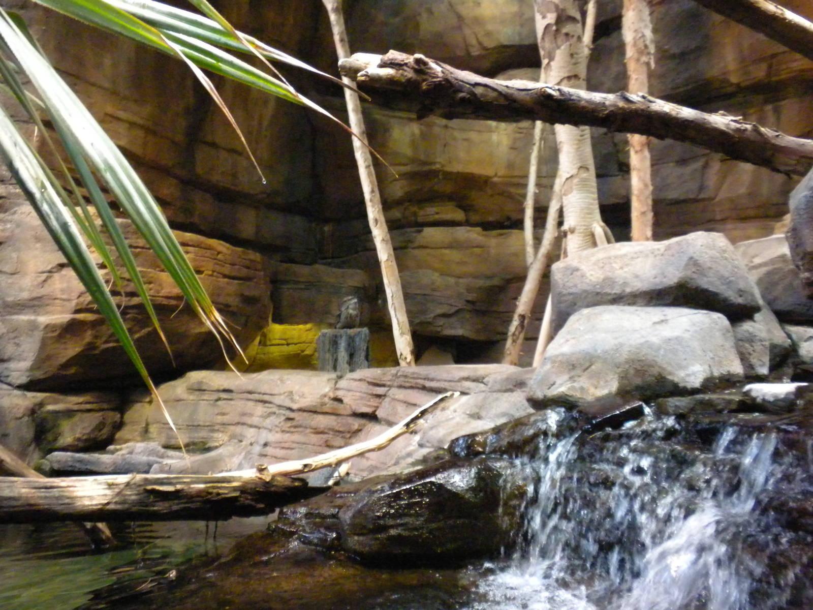 Animal Planet Australia Wild Extremes Aquarium National - Exploring Mars