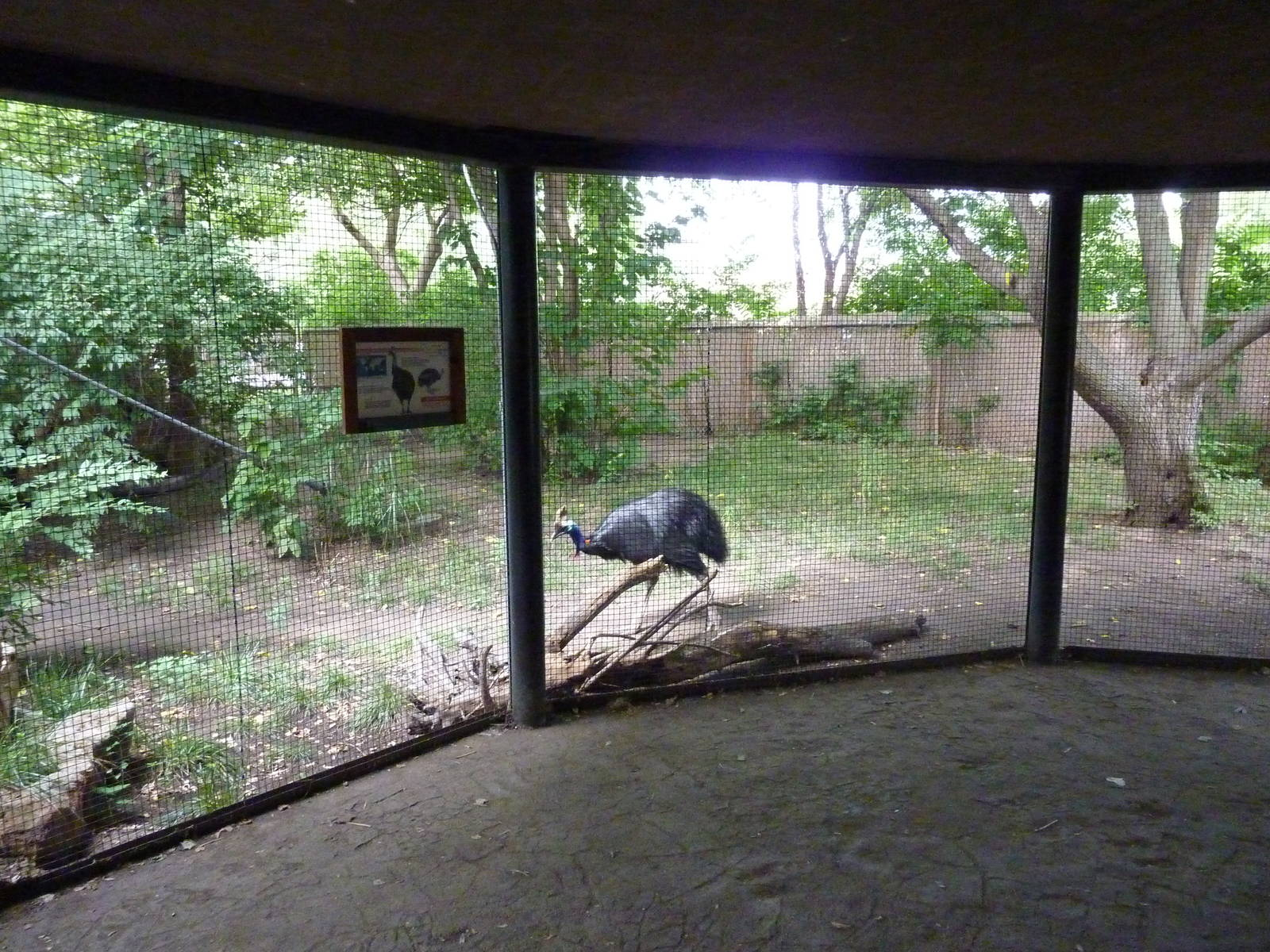 20+ Geese Cassowary Regular Show Pictures and Ideas on Meta Networks