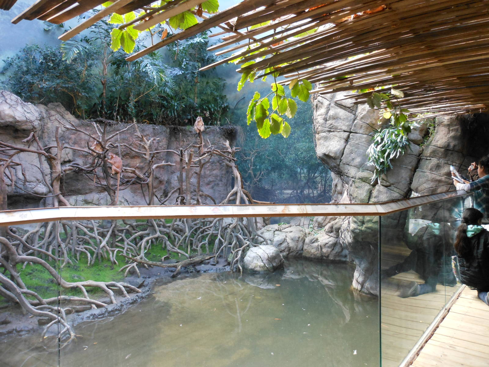 Jungle World Exhibit 031215 Zoochat - Year of Clean Water