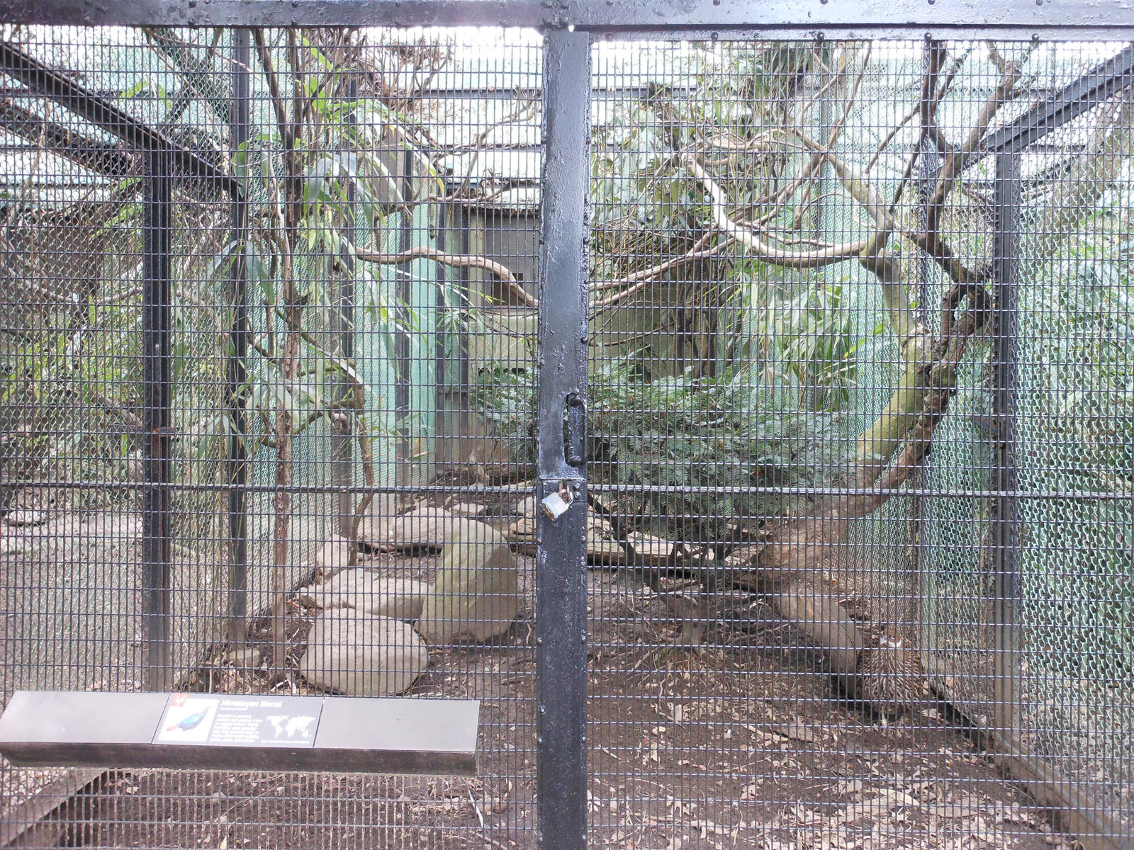 20+ Pheasant Enclosures Pictures and Ideas on Weric