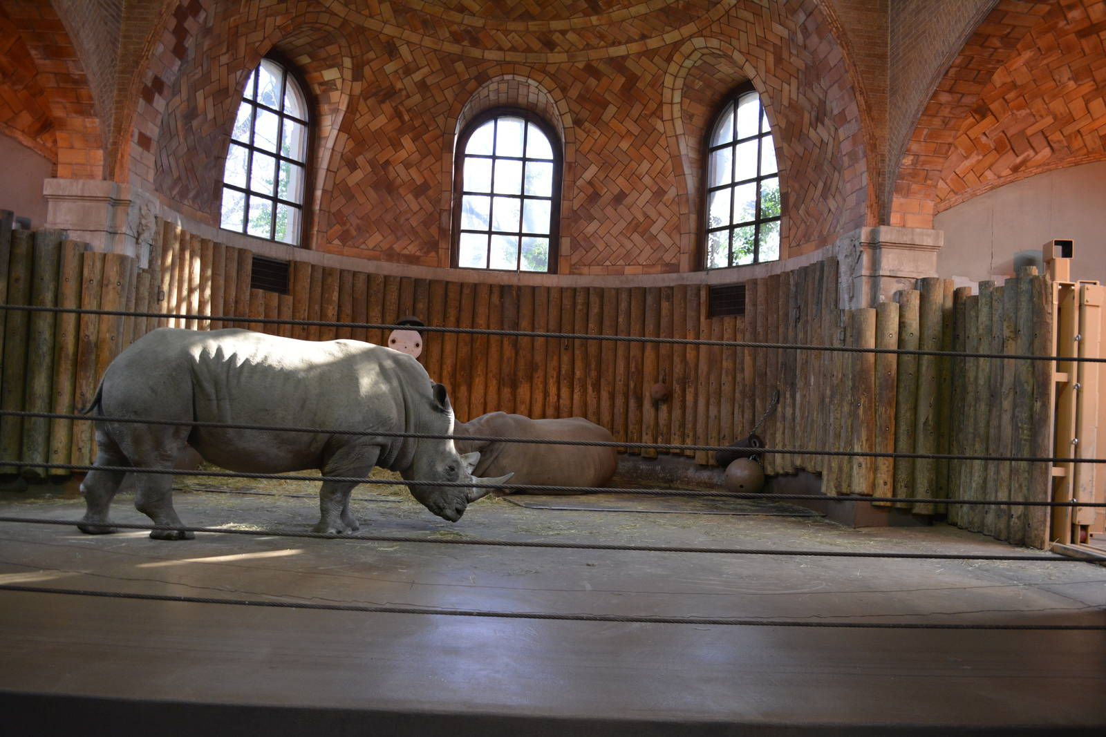 Bronx Zoo Indian Rhino Exhibit Zoochat - Year of Clean Water