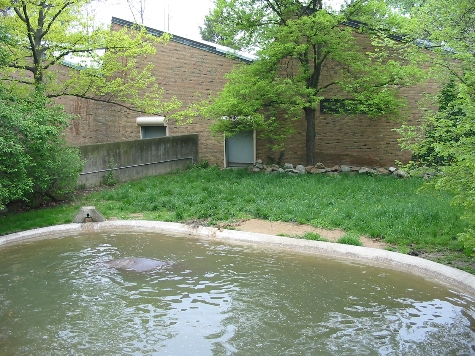 Cleveland Zoo 2003 - Hippopotamus Exhibit Pachyderm House Zoochat