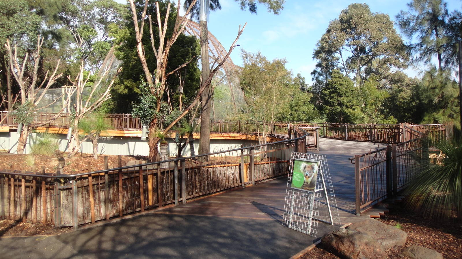 Koalas In Australia Koala Information And Photos - MVlC