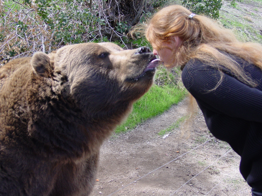 kissing bear