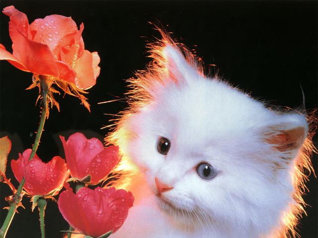 pisica3.JPG
