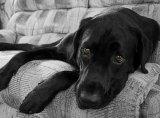 Sfaturi practice - Perioade critice la câini