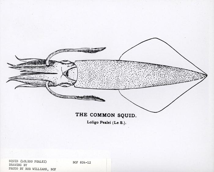 fish9996