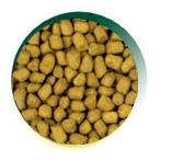 Mangus del Sole - Cat Hypo Pesce. 300gr