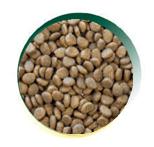 Mangus - Cat Grain Free Kitten Pollo. 2kg