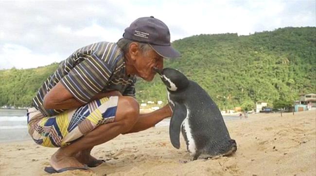 Dindim, pinguino riconoscente