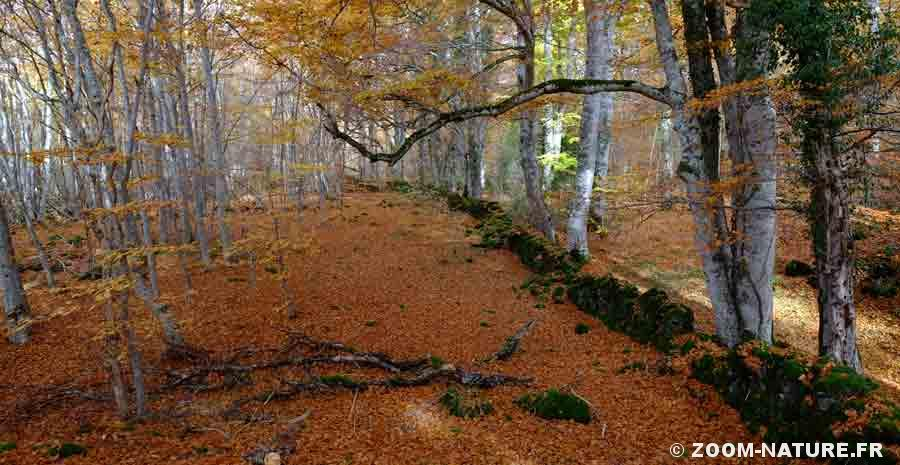 la litiere de feuilles mortes un