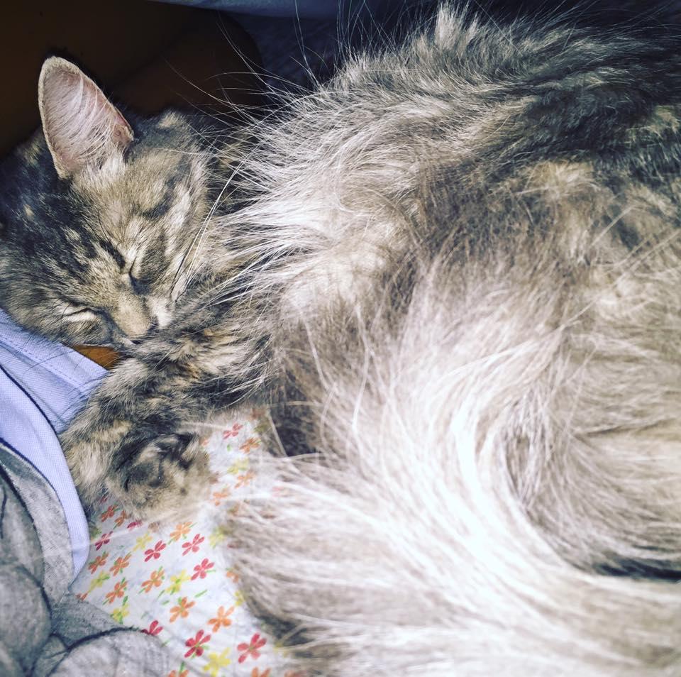 Degrado, maltrattamento e uccisione: l'incubo inarrestabile dei gatti