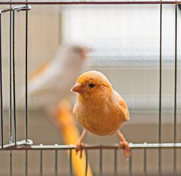 accessoires pour cage a oiseaux