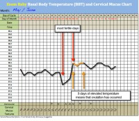 Basal Thermometer and Free BBT Chart
