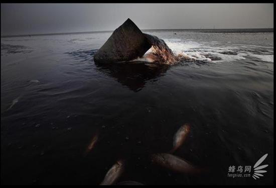 inquinamento-nel-mar-giallo-cina-provoca-moria-di-pesci-impressionante