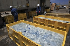 meduse invadono reattori nucleari in giappone israele e scozia