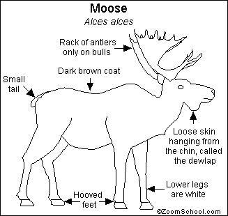 Elk Anatomy Diagram, Elk, Free Engine Image For User
