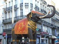 grand_elephant