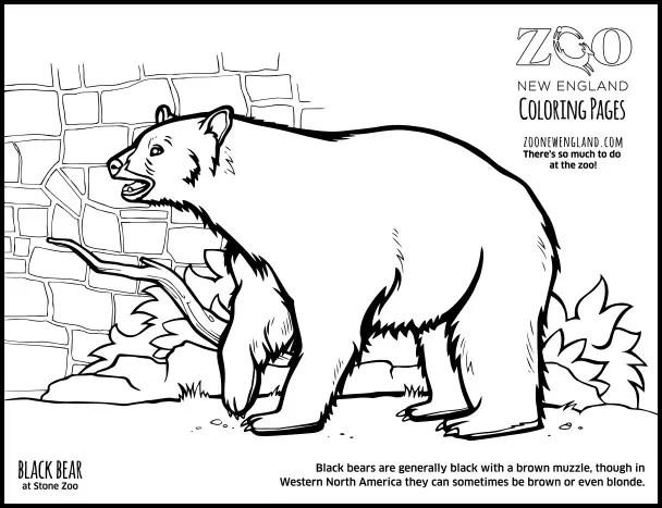 Color a Bear