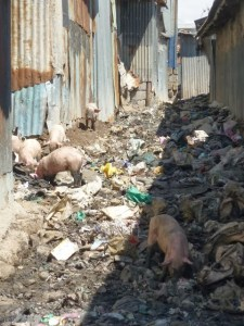 Pig value chain
