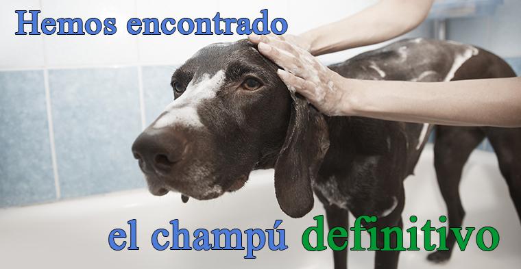 Dermavet, el champú para perros y gatos definitivo