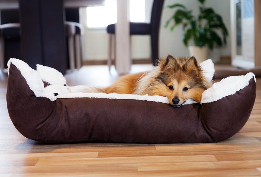 le bon panier pour chien comment le