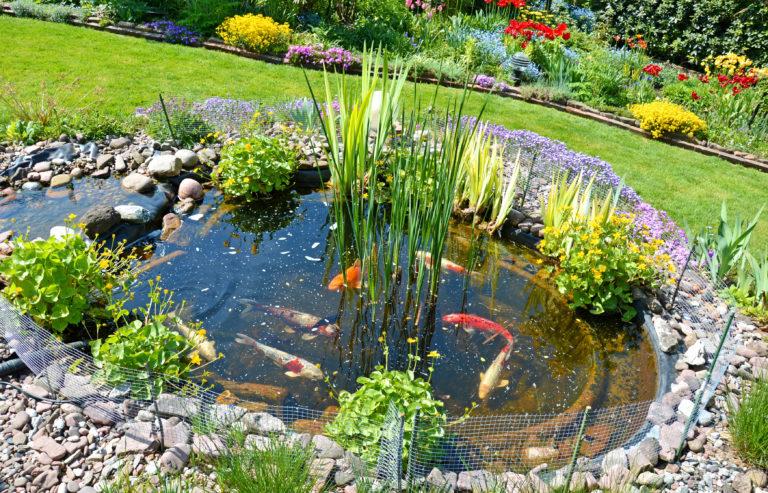 construire un bassin de jardin pour