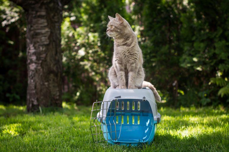 comment choisir la caisse de transport pour son chat magazine zooplus