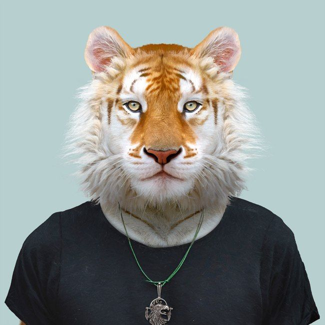 ram the golden tiger