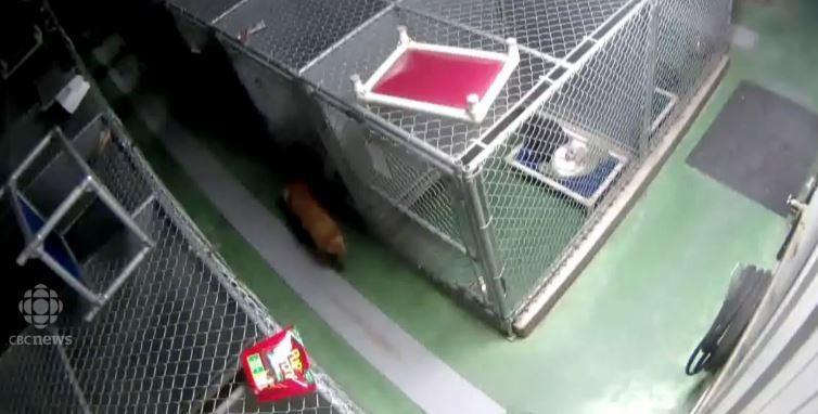 maggie adopta perritos 3