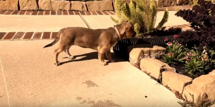rescate-perro-caja-de-carton8
