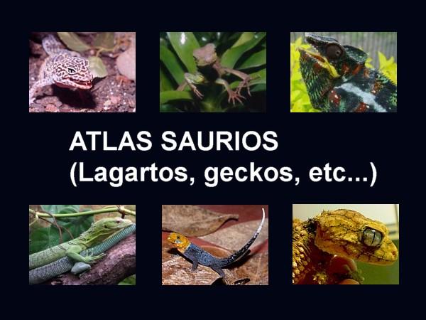Saurios Lagartos  Zootecniadomesticacom