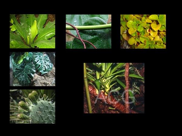 Plantas en el terrario  Zootecniadomesticacom