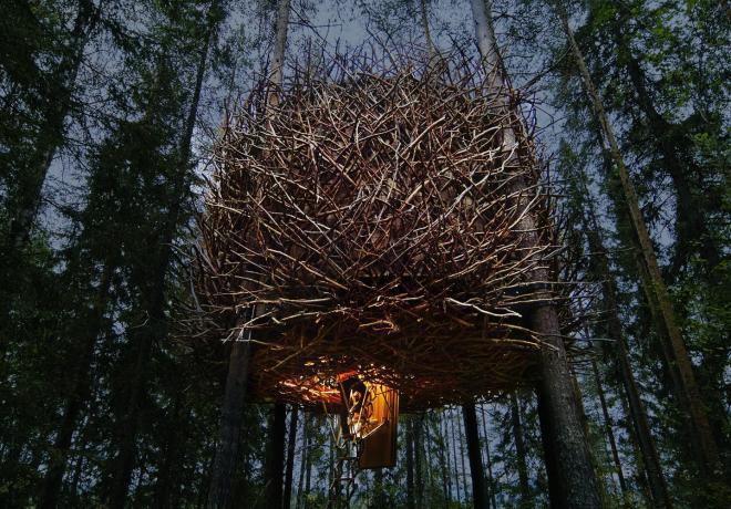 Hotel Tree, ninho de pássaro